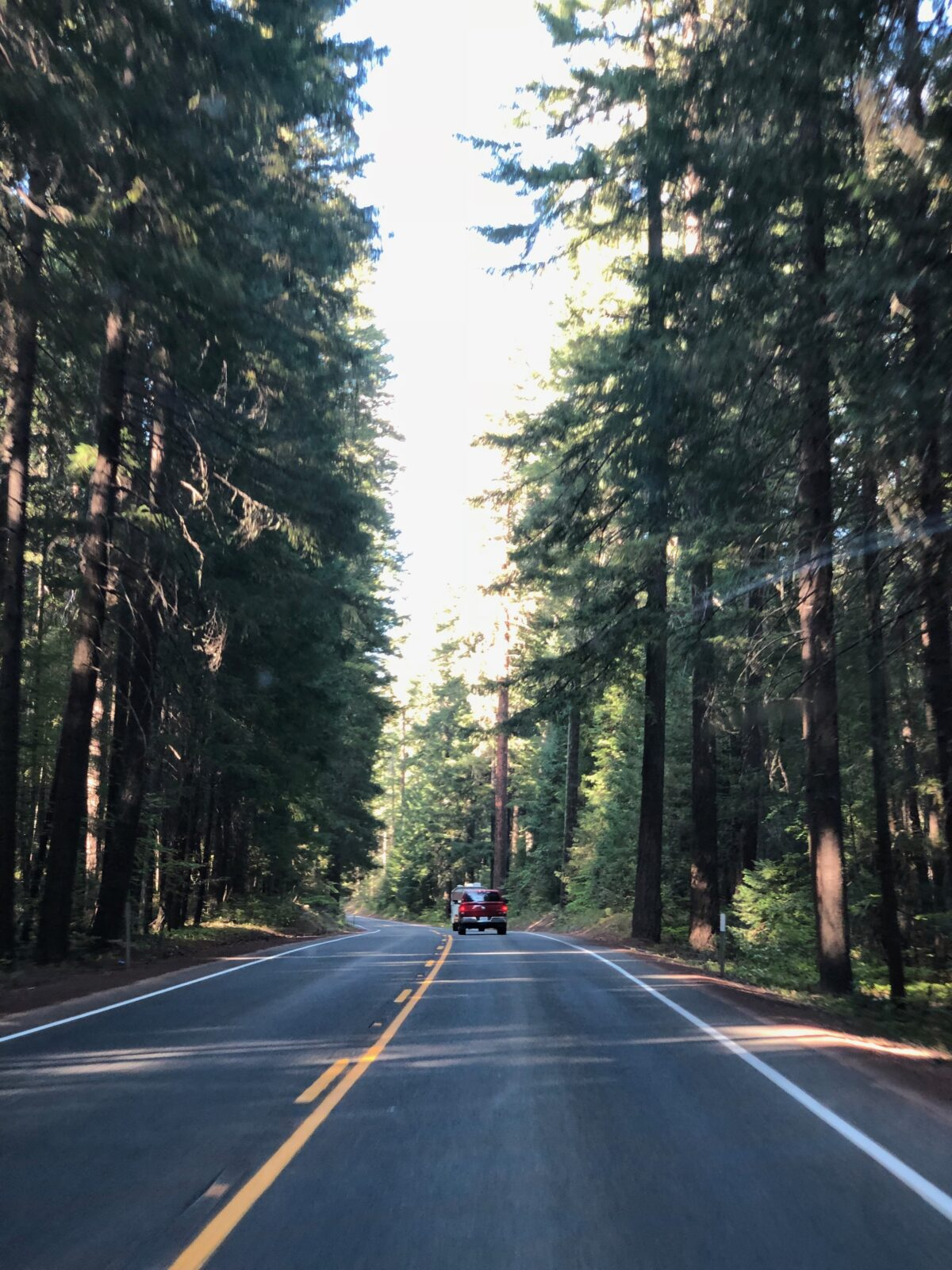 Oregon route foret